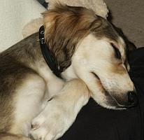 Wahira schläft