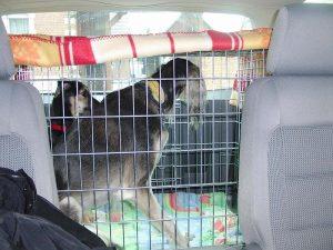 Abby und Wahira im Auto