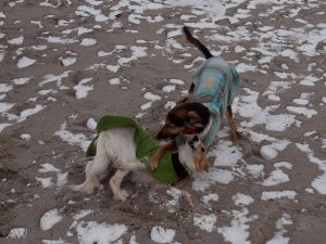 Abby und Pino spielen am Strand