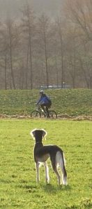 Radfahrer im Blick