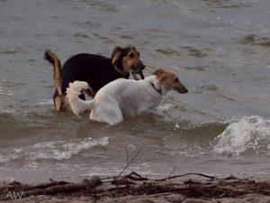 Urlaub Januar 2013: Abby mit Pino im Wassertrand
